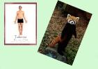 yoga-animaux01