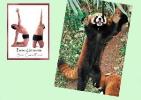 yoga-animaux02