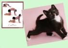 yoga-animaux03