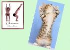 yoga-animaux04