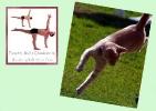 yoga-animaux06