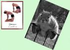 yoga-animaux07