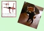 yoga-animaux08