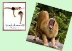 yoga-animaux09