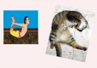 yoga-animaux12