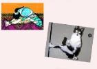 yoga-animaux15