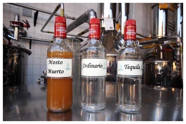 mexique-tequila-12