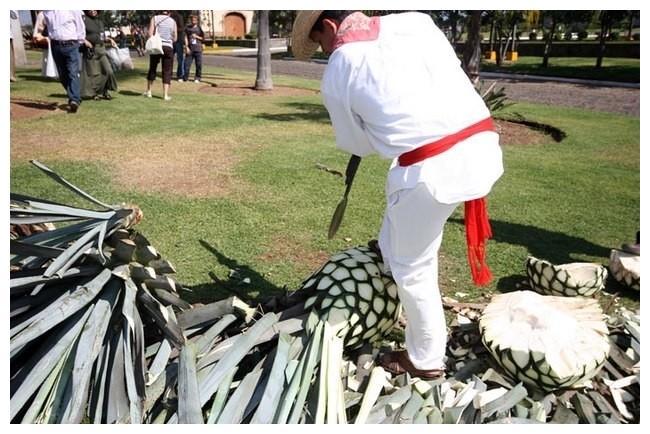 mexique-tequila-5