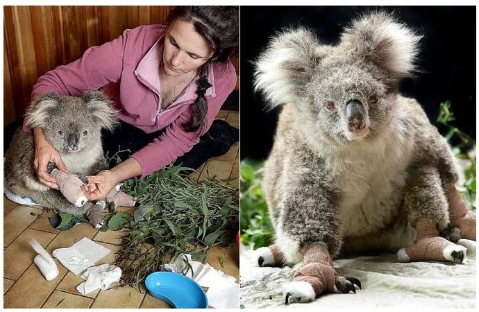 sam-le-koala