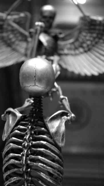 squelette-16