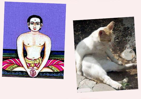 yoga animaux