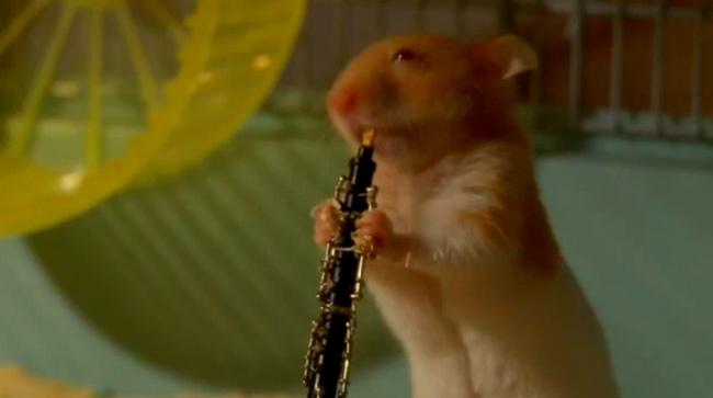Hamsters joueurs de jazz