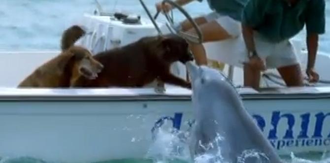 dauphin-bisou-chien