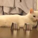 Chat le plus intelligent du monde