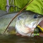 Vidéos pour les Pêcheurs
