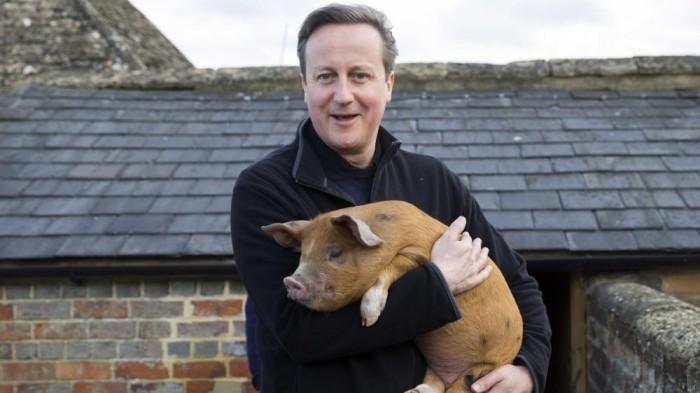 david-cameron-cochon