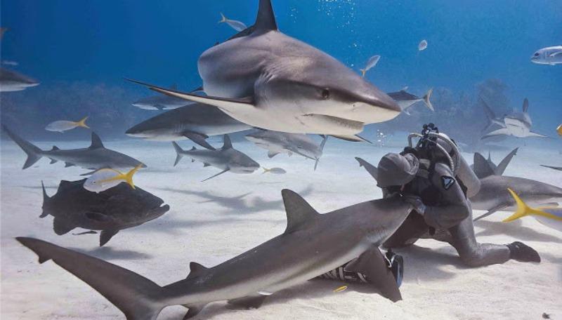 la-femme-qui-danse-avec-les-requins-2