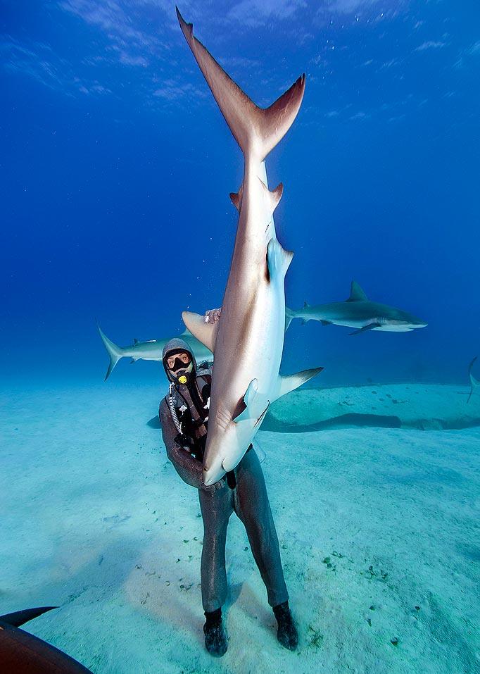 la femme qui danse avec les requins immobilite tonique