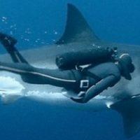 Decouvrez la femme qui danse avec les requins