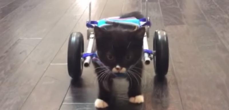 les premiers pas d un chaton grace a une imprimante 3d