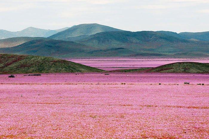 quand-le-desert-fleuri-2