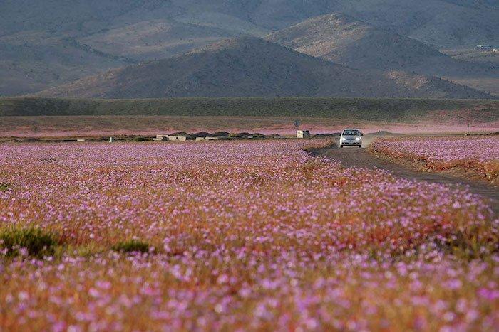 quand-le-desert-fleuri-3