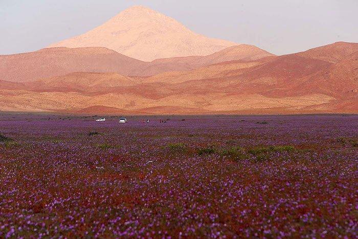 quand-le-desert-fleuri-4