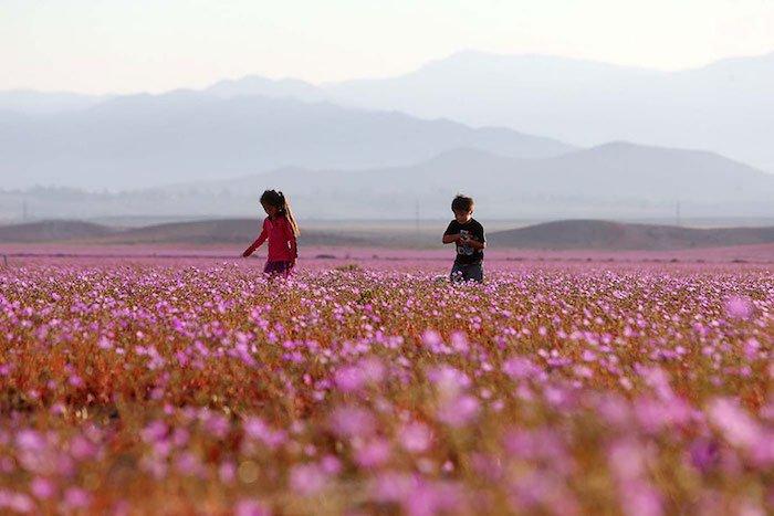 quand-le-desert-fleuri-5