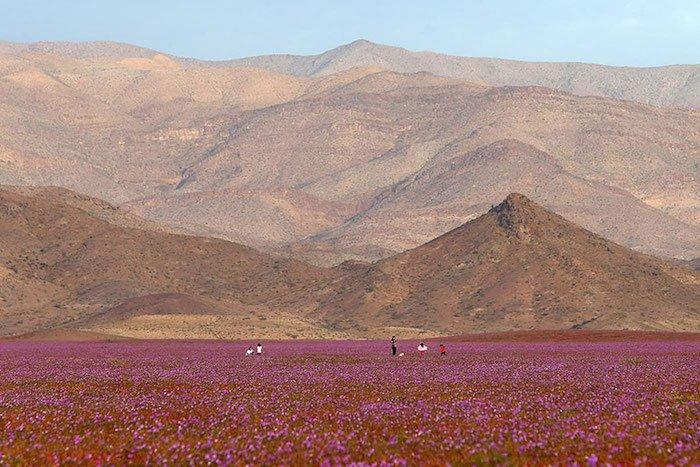 quand-le-desert-fleuri-6