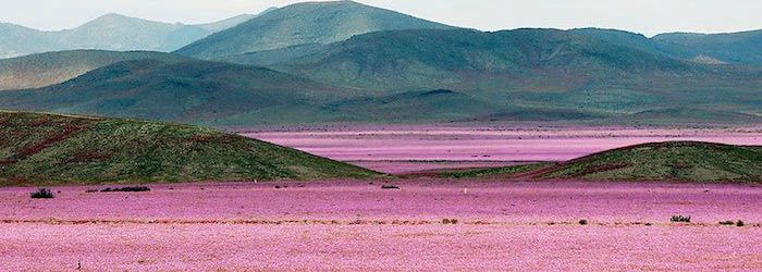 quand-le-desert-fleuri-une