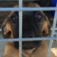 C'est la journée mondiale du chien : je vous raconte mon expérience de bénévole